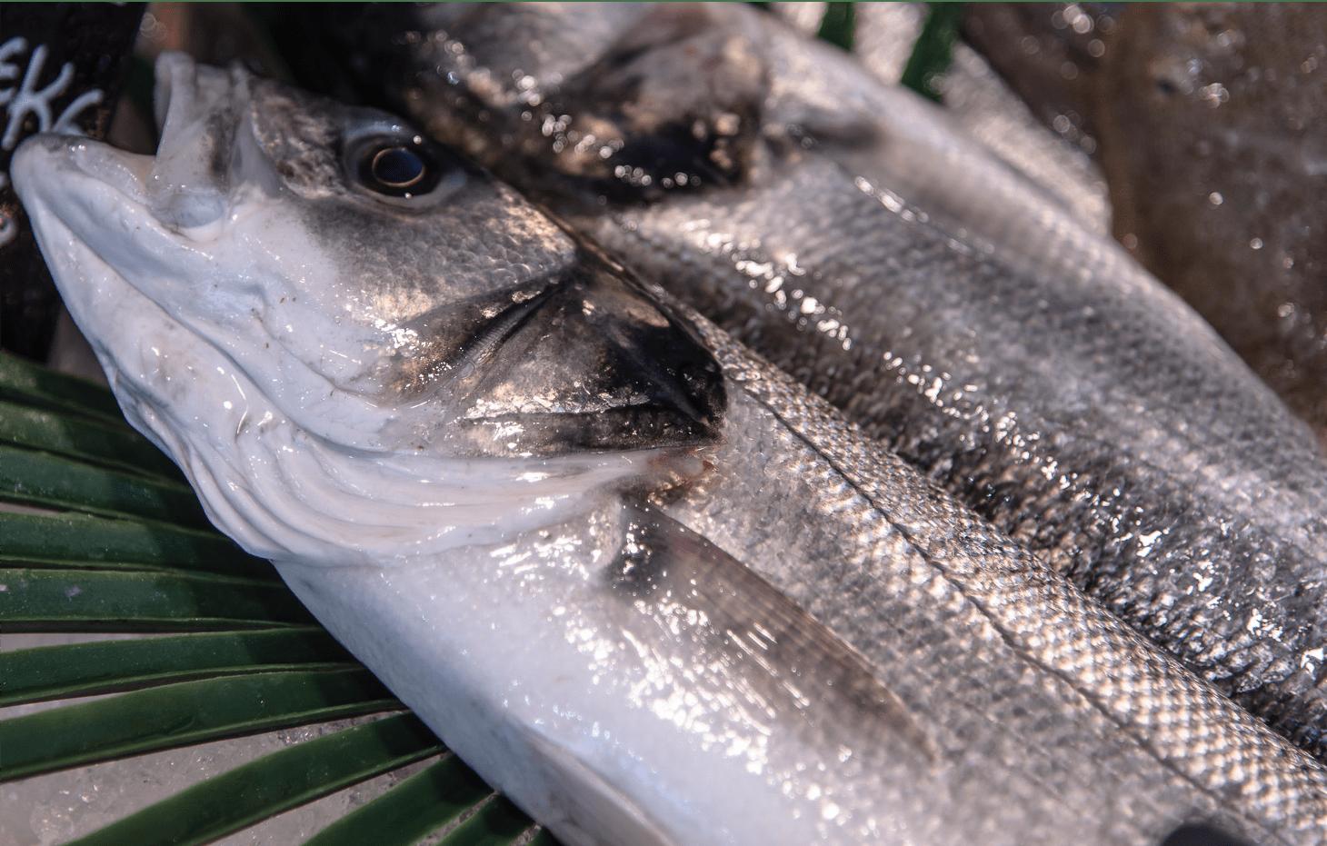 Plats cuisinés de poisson, traiteur de la mer | Les Entrées de la Mer